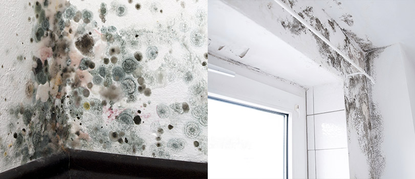 Blount and Maslin explain condesation mould damp and mildew
